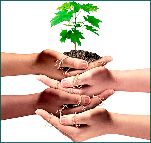 several hands supporting a small plant
